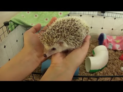 Cleaning the Hedgehog's C&C Cage
