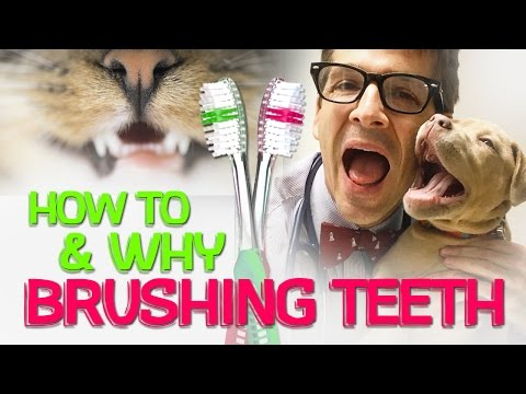 How To Get Your Dog (or Cat) to Love Teeth Brushing