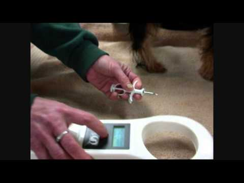 Microchip Procedure Demonstration in Dog - Denver NC Veterinarian