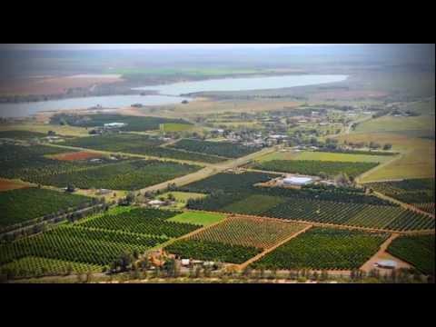 Citrus in the Riverina - Australia's Food Bowl