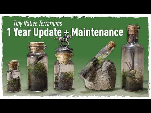 Tiny Native Terrariums 1 YEAR Update + Maintenance