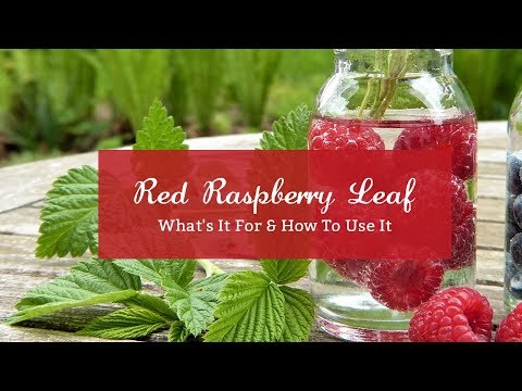 Red Raspberry Leaf - What's It For & How To Use It