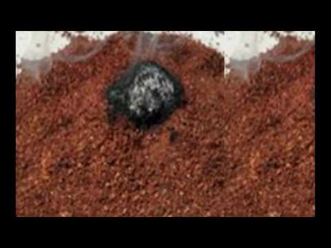 How Burning Coffee Grounds Keep You Away From Mosquitoes - What & How