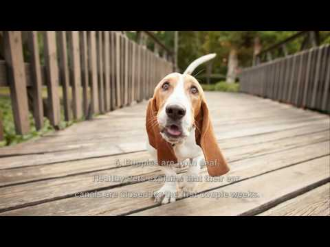 7 Fun Facts About Your Dog's Ears
