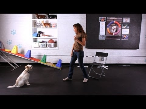 How to Teach Dog to Jump into Your Arms | Dog Tricks