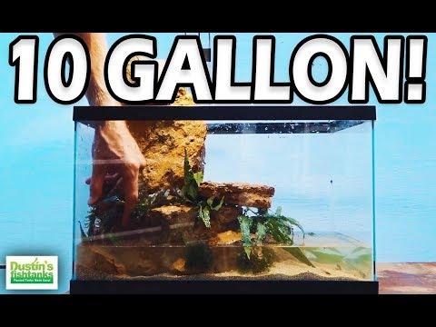 10 GALLON AQUARIUM, How to setup an EASY LOW TECH 10 gallon fish tank