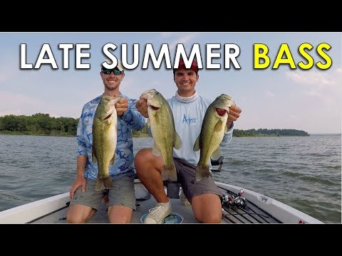 Where to Find Shallow Bass in the Late Summer