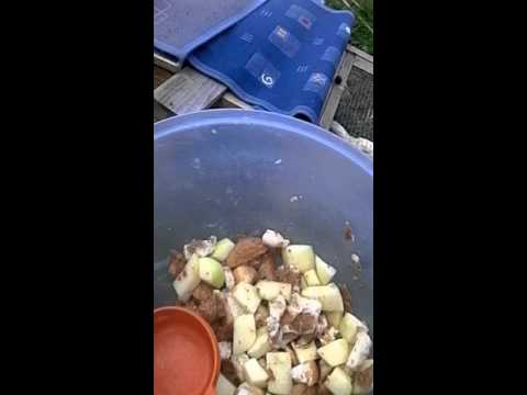 Diy how to make Guinea pig food