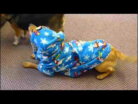 Hooded Dog Onesie by Find Me a Gift.avi