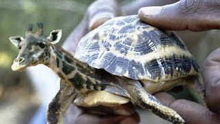 ऐसे विचित्र जानवर जिन्हें विज्ञानिको ने बनाया | Hybrid Animals created by Scientists in Hindi