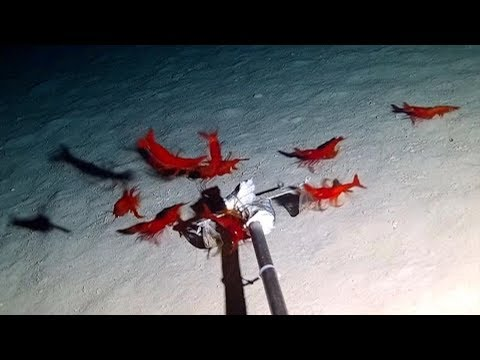 Chinese scientists identify over 30 new deep sea species