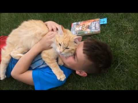 Cute Funny Cat Video Very affectionate likes to lick Pets Animals Life on the Farm
