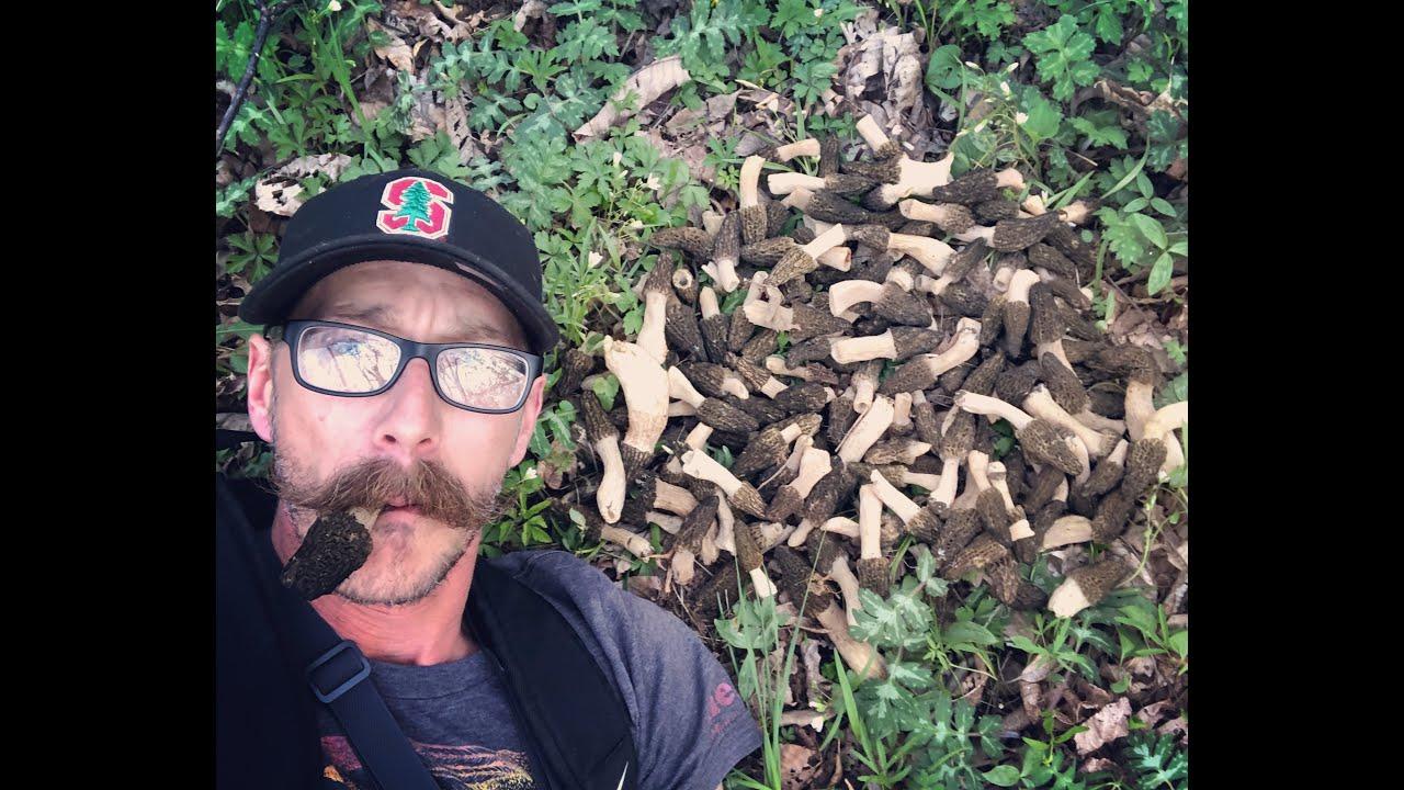 Wading Creeks For Big Black Morel Mushrooms