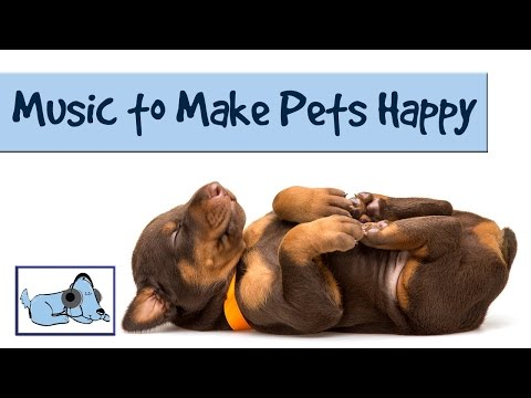 Music Makes a Happy Spaniel - Keep Dogs Happy with Music by Relax My Dog 🐶 #SPANIEL02