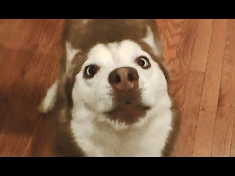 Cute Cross Eyed Dog says