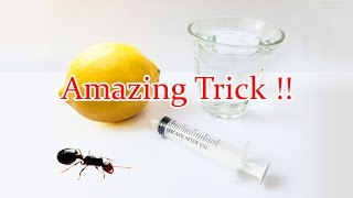 Catch A Queen Ant in Your House