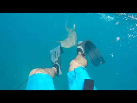 Shark Attacks Spearfisherman || Florida Keys 2017