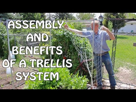 Assembly And Benefits Of Trellis System
