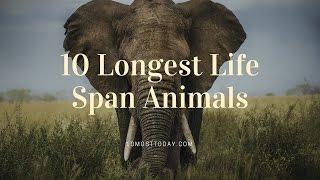Download 10 Longest Life Span Animals Video