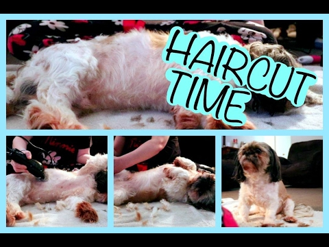 DOG GROOMING SERIES: HOW I CUT MY SHIH TZU (SAM'S) HAIR FOR THE SUMMER!