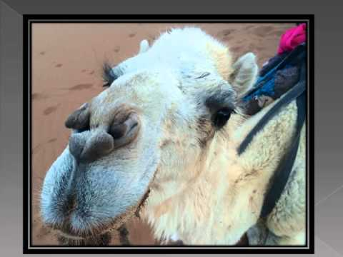 Best Tour Morocco video  Oct 7th 2015