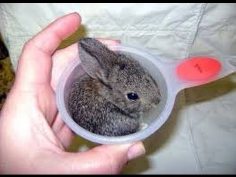 Rabbit Funny Jokes  ||   Rabbit Funny Gif [HD]