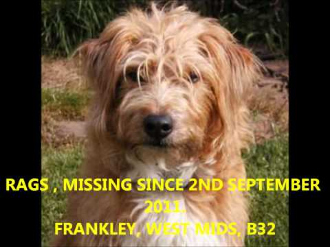 missing-stolen dogs uk - part one