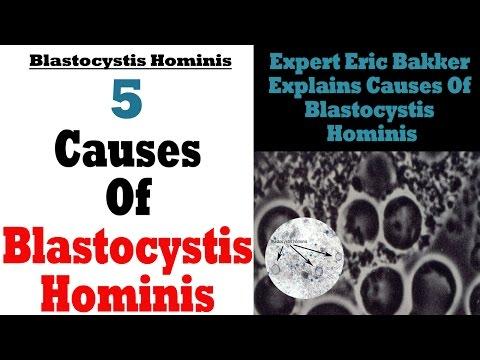 What Are The Causes Of A Blastocystis Hominis Infection