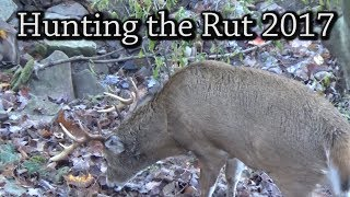 Archery Hunting the Rut 2017 Part 1