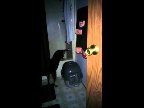 Dog licking dripping water