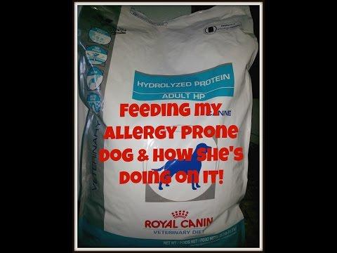 Hypoallergenic Dog Food - Royal Canin Hydrolyzed Protein Adult HP (Feeding my allergic dog)