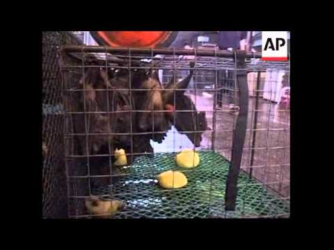 WRAP APTN visits Chinese animal market