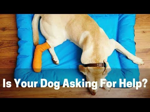 9 Signs Your Dog Is In Pain. Don't Let Him Suffer!