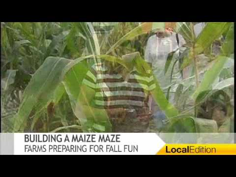 Building a Maize Maze