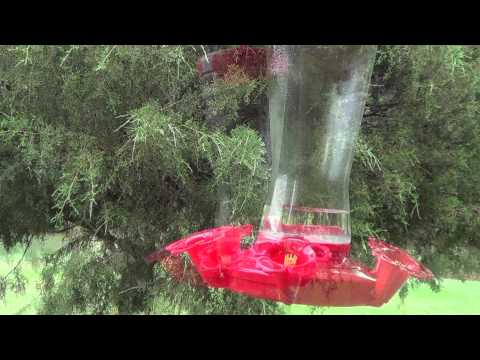 Hummingbirds and Sugar Water Recipe and feeder care