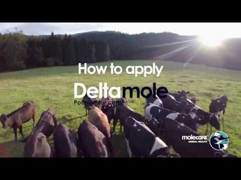 How To Apply Deltamole - Fly control Pour On For Cattle from Molecare