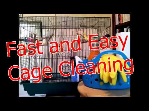 Cleaning Your Parakeet's Cage Fast and Easy