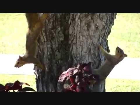 squirrel eating pecans