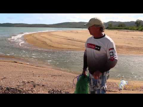 How to use a cast net to collect live bait from beach creek mouths.
