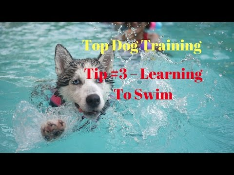 How To Learning Your #Puppy To Swim