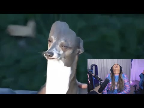 Reacting To Your Memes (Meme 👏 Review 👏)