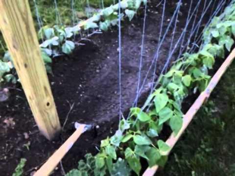 Mittleider Gardening: How to Weed your Garden FAST