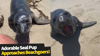 Cute seal pup approaches beachgoers to play and hang out!