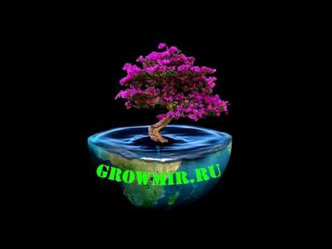 Как устроена система для выращивания растений Wilma