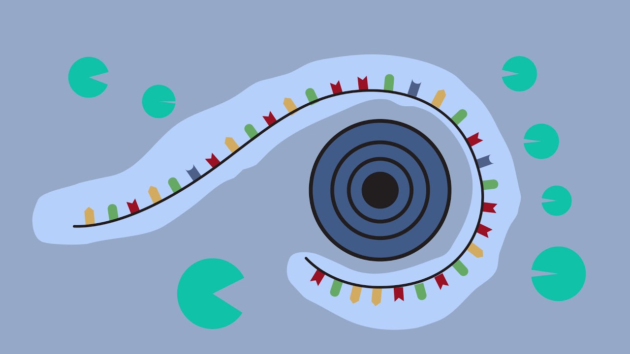 EXPERT - Developing mRNA Nanomedicines to Treat Cancer and Cardiovascular Disease