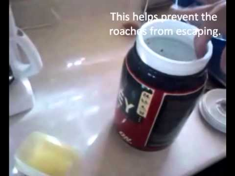 Make Your Own Roach Trap