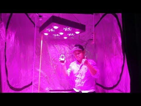 Ecospeed PPFD Test for 1200w COB led grow light (Test at 5ft 653Uumol/m2/s)