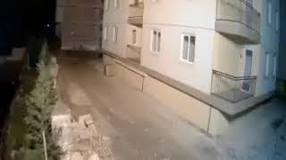 Pas predosjetio zemljotres u Albaniji