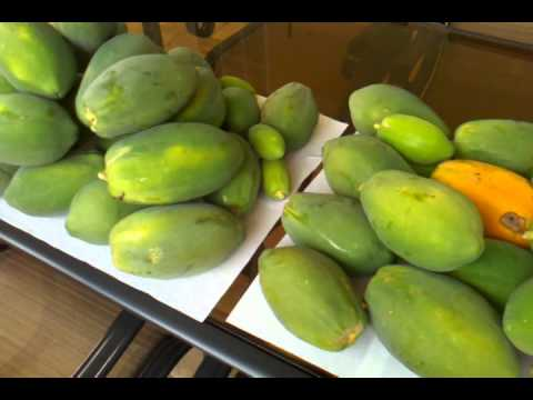Papayas from cold front tree