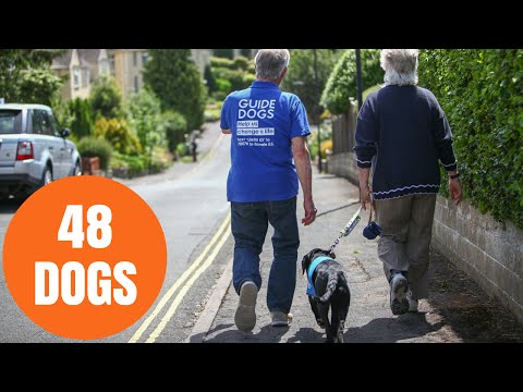 Dedicated couple who have trained 48 guide dogs